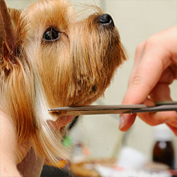 best-pet-grooming-services-in-aventura-florida-shopping-guide