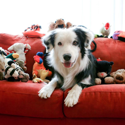 best-pet-shop-stores-in-aventura-florida-shopping-guide