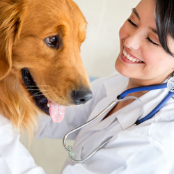 best-veterinary-services-in-aventura-florida-shopping-guide